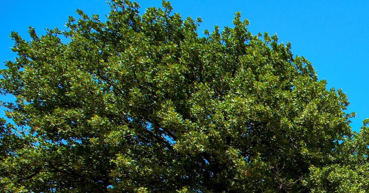 Çanakkale Kent Ekolojisi Turu