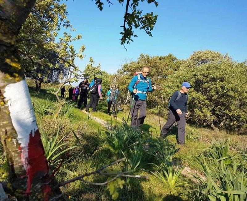 Yürüyüş Grupları